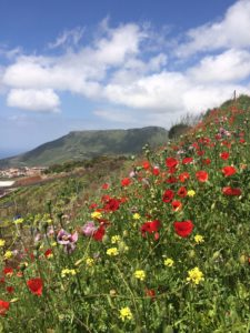 Berge und Wildblumen Finca Ferienhaus Tegueste