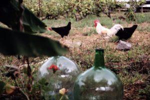 Hühner Finca Garten Ferienhaus Tegueste