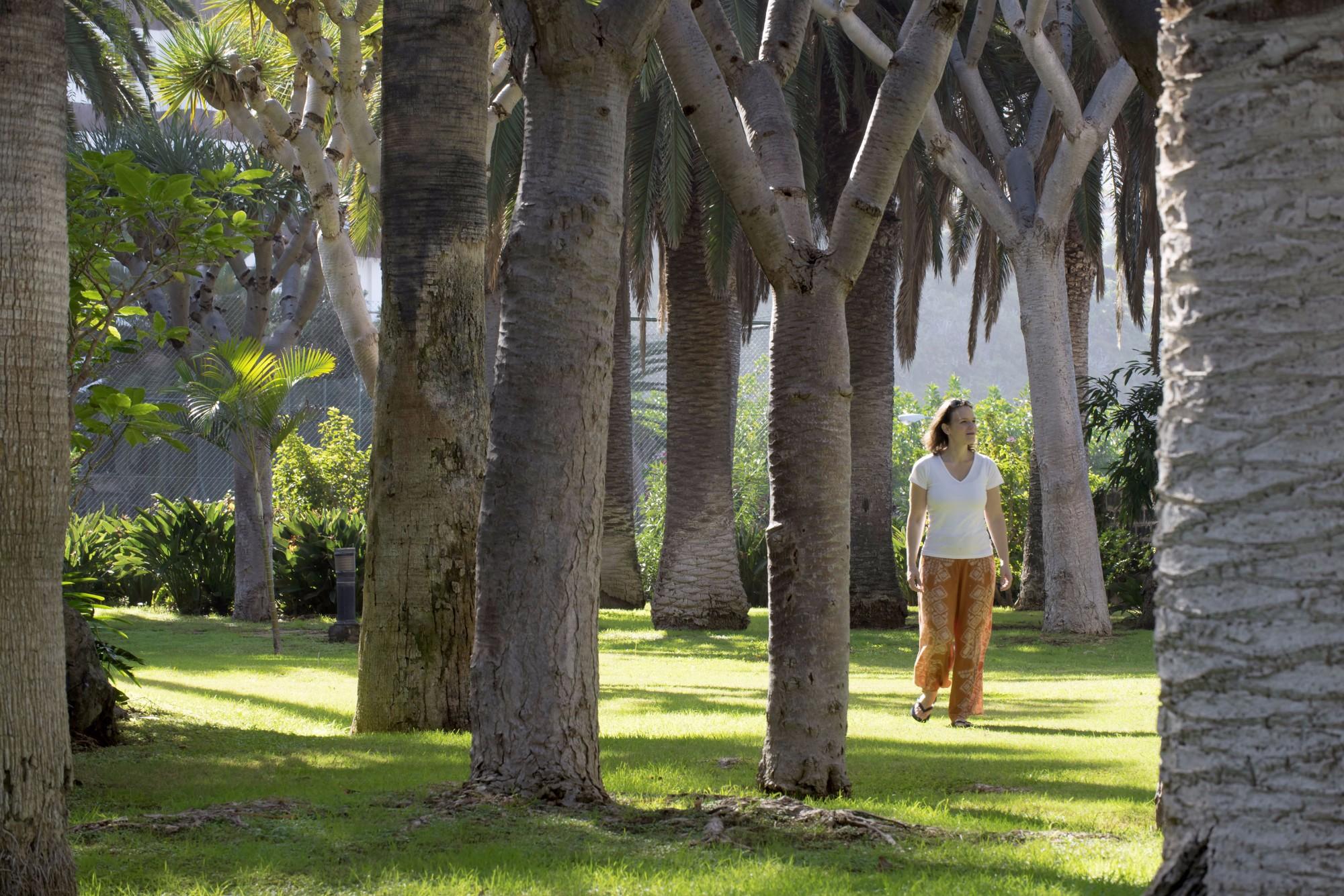 Palmen und Drachenbäume Ferienwohnung Hotel Maritim