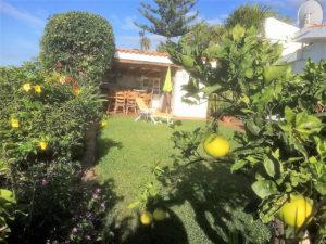 Teneriffa Ferienhaus La Victoria La Palmita Grünanlagen