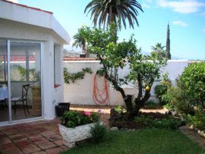 Teneriffa Ferienhaus La Victoria La Palmita Obstbaum,
