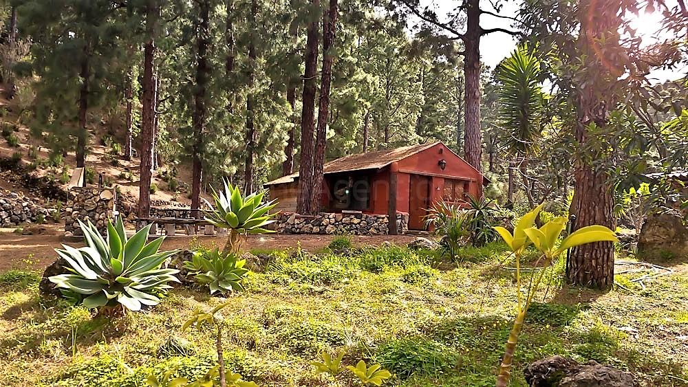 Ferienhaus La Guancha Wandern Pflanzen