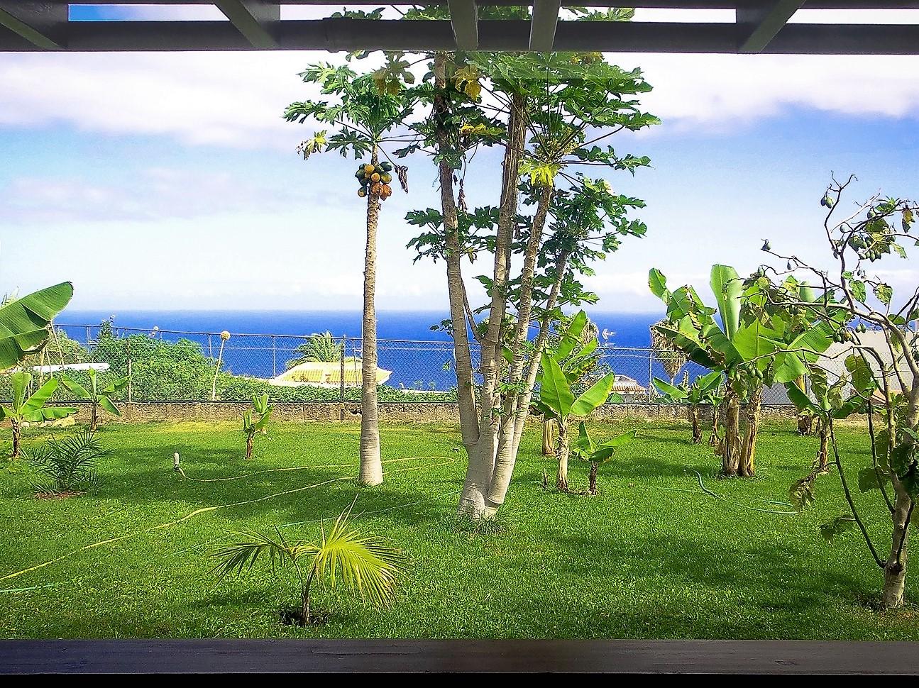Ferienhaus Teneriffa Nord Icod de los Vinos Garten und exotische Pflanzen