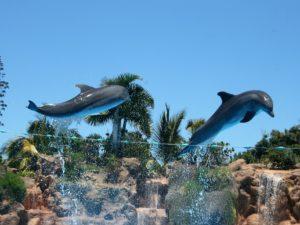 Die Delfinshow im Loro Parque Puerto de la Cruz ist eine beliebte Attraktion für Groß und Klein.
