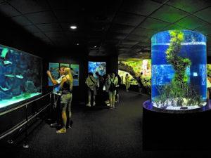 Teneriffa Loro Parque Aquarien