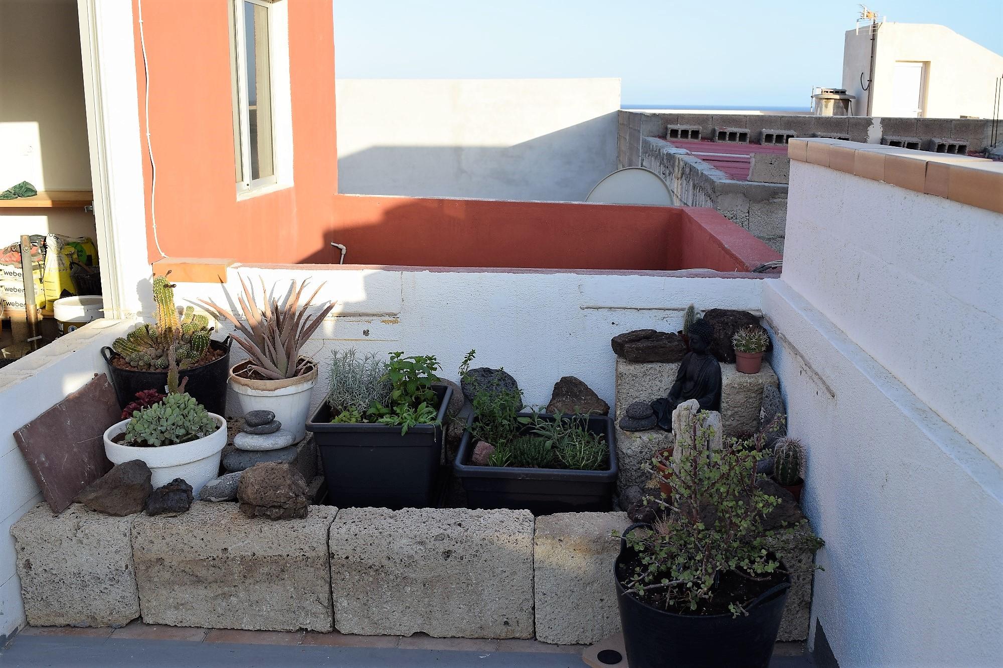 Ferienwohnung El Médano am Strand - La Caleta - Dachterrasse Pflanzen