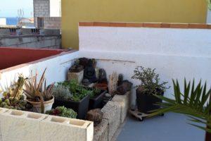 Ferienwohnung El Médano am Strand - La Caleta - Pflanzen