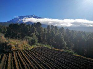 Blick aufg den Teide oberhalb von La Guancha