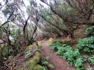 Das Anagagebirge ist ein magischer Ort mit wunderschönen Wanderwegen. Die exklusive Teneriffa Tour nach Anaga sorgt für bleibende Eindrücke.